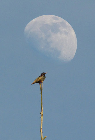 Star im Mond, Foto: Martin Sevcik
