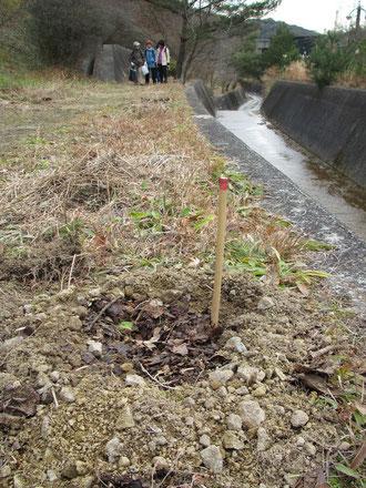 植樹作業が終わってドンジリ通りを帰宅