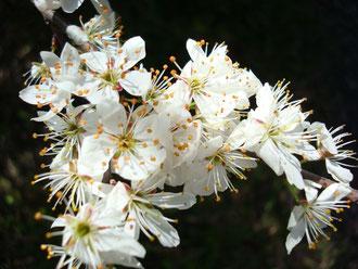 Frühling an der Kander
