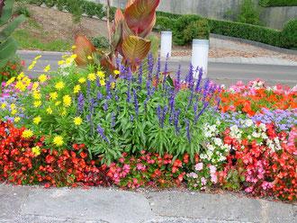 Blumenrabatte Weggis