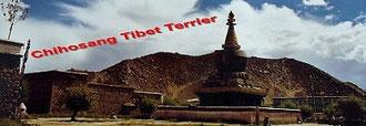 Tibet-Terrier-Zwinger Chihosang