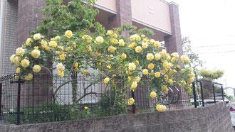 2012/5/20 うーちゃんを偲んで