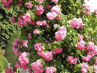 Foto: http://www.liberty-image.de