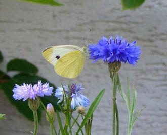 Besucher im Gärtli