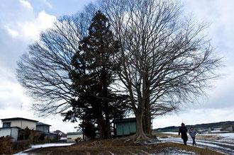 高渕会長・小島会員(八戸市の日赤病院付近でヤナギの巨木を探索中)