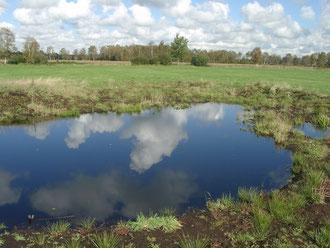 Teich auf dem NABU-Gelände, Foto H. Lobensteiner