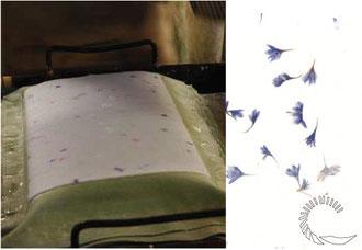 couchage d'une feuille de papier au moulin de vallis clausa