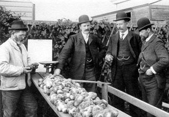 - Dites donc, Jenkins, voilà un joli lot de patates, vous ne trouvez pas?