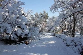 La neige a recouvert Flayosc
