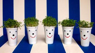 Die Kinder haben Kresse gepflanzt