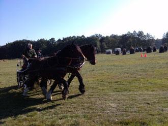 Elfi und Rubinia nehmen auch trotz ihren deutlich kräftigeren bauweise im vergleich zu ihren Konkurrenten an Pferdetunieren teil.