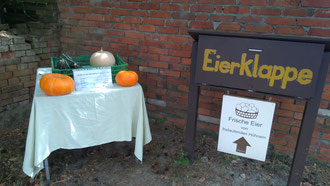 Unser Selbstversorger-Garten mit Kartoffeln, Tomaten, Gurken, Kürbissen etc.
