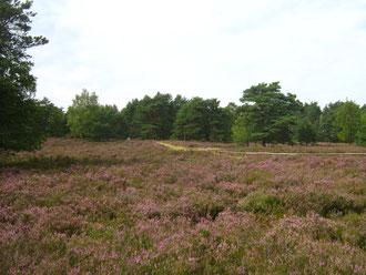 Heideflächen in der Lüneburger Heide