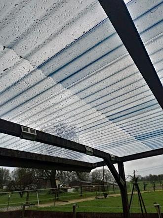 Unser neues Dach auf der Pergola im Gärtchen - voll hell! :-)
