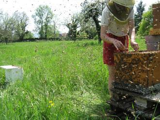 des abeilles très douces