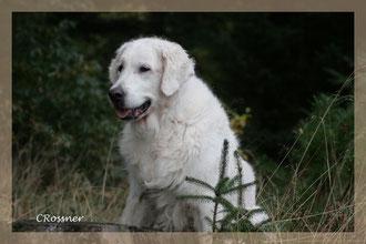 Mein Herzhund