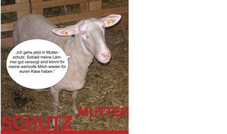 Schafe in Karenz