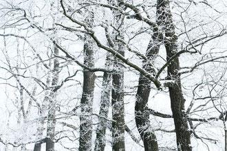 Kahle Zweige und Bäume vor weißem Schnee