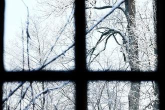 Blick durchs Fenster auf verschneite Zweige