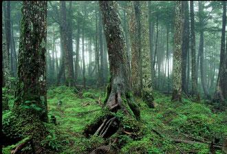 森林浴で癒される