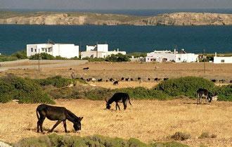 A farmland in Paros