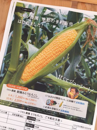 ミモレ農園 「朝摘みとうもろこし」(品種:ゴールドラッシュ) 予約販売はじまりました。