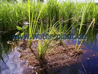 unbepflanzte Schwimm - Insel, 60 cm x 60 cm