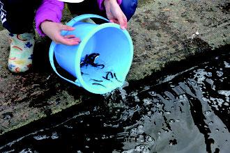 鮭稚魚の放流