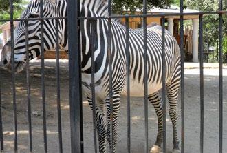 Лучший зоопарк Рим фото