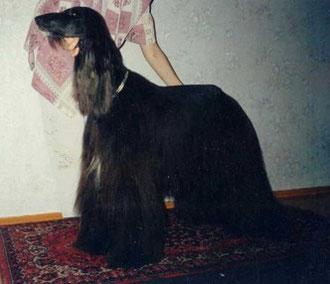 Скарлетт, 1998 г.