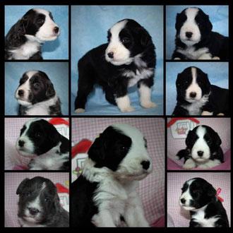 De pups van