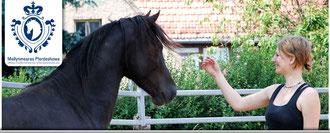 Pferdetraining in Dresden