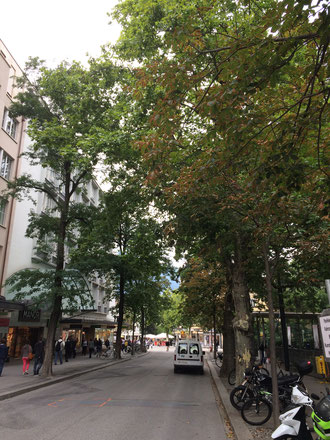 Bahnhofstrasse in Chur, vor der Baumfällaktion (August 2015) (Foto UGN)