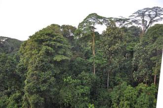 Blick auf den Bukit Batok Nature Park