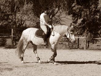 Pferd mit Kniebruch, wir geben nicht auf!