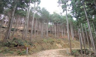 森林経営計画を樹立し、施工した40年生ヒノキ間伐林