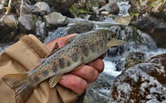 Aydius pêche truite gite location