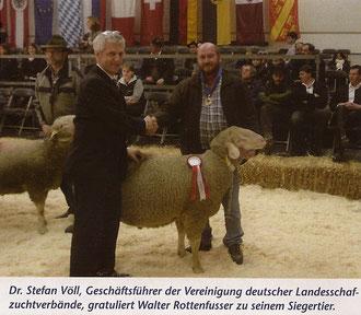 Merinolandschaf-Widder