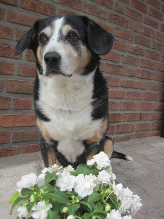 15.05.2012 Bine's 12. Geburtstag - alles Liebe und Gute für dich!!!