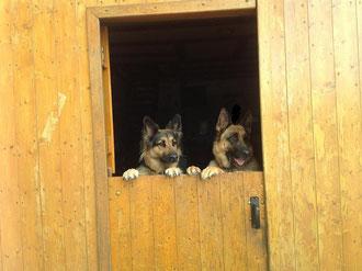 --Unsere Klöntür-- Milli und Rico