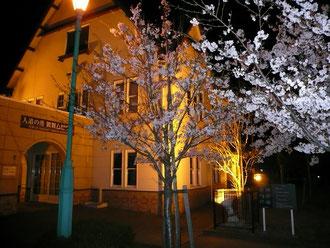 敦賀ムゼウム館の夜桜