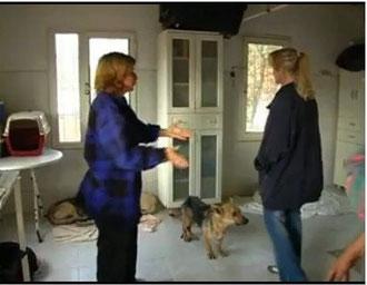 Hundeliga, Angels For Dogs e.V., Foca, Türkei, Tierschutz Türkei, Izmir Tierfreunde,  Mustafa und Nilgün Karsilayan, iDO-World