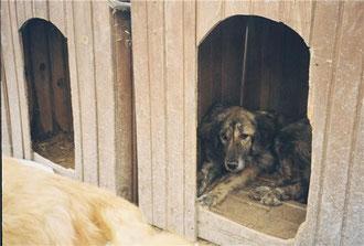 Angels For Dogs e.V., Foca, Türkei, Tierschutz Türkei, Izmir Tierfreunde,  Mustafa und Nilgün Karsilayan, iDO-World