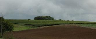 Vignobles des Côteaux du Giennois