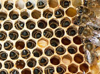 Verhungerte Bienen
