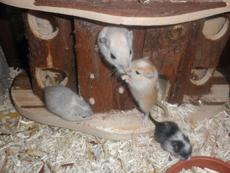 Bianca mit drei Jungmäusen von Speedy
