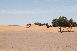 Tour por el desierto del Erg Chebi. www.solomarruecos.com