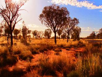 noch 1 km bis zur freien Sicht auf den Uluru