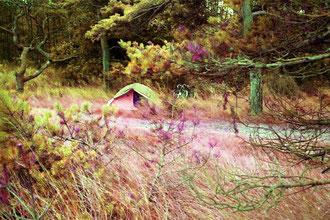 unser Zelt gleich neben dem Fahrweg