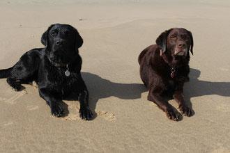 Lennox und Annie am Strand von Texel